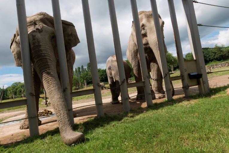 Investir ou mourir, les zoos dans une course effrénée à l'innovation