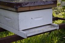 Pulvérisation contre les moustiques : les apiculteurs appelés à se faire recenser