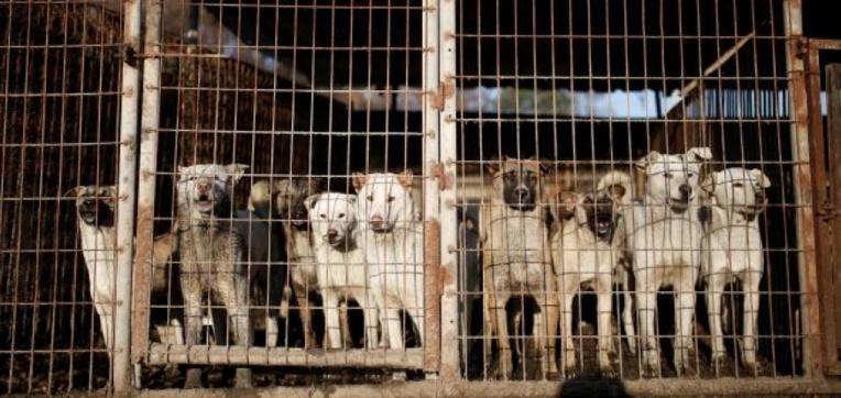 Corée du sud: tuer les chiens pour leur viande est illégal, juge un tribunal