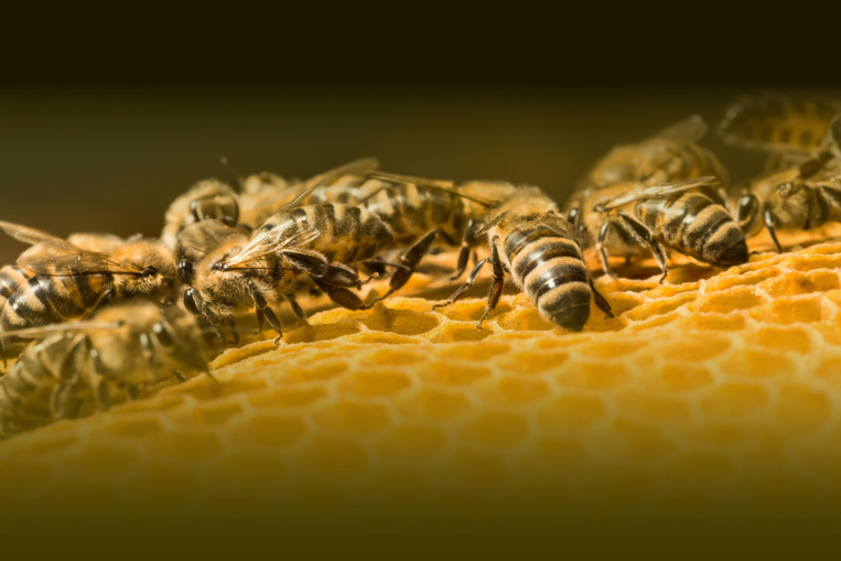 Page enfant : Sauver les abeilles, une nécessité !