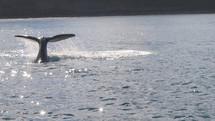 Quand une baleine se venge