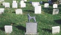 Hommage au cher disparu...les cimetières virtuels d'animaux fleurissent sur la toile