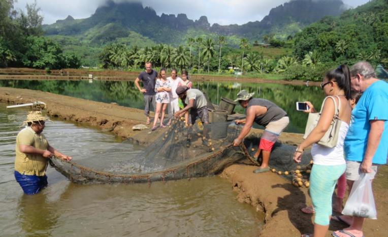 Le site comprend 11 bassins sur une superficie totale de 2 hectares.