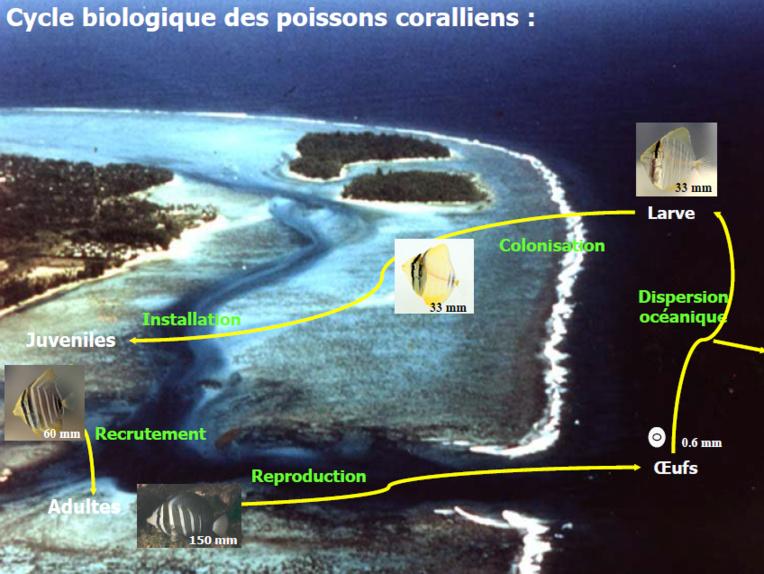 Les effets inquiétants des pesticides sur la mémoire des poissons