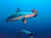 Un drone marin pour compter et mieux protéger les cétacés en Méditerranée