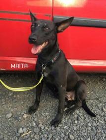 Maita est une jeune femelle stérilisée au passé difficile - elle a été victime de tires à la carabine et d'un accident - Dr. SPAP
