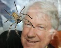 Un Australien va passer trois semaines au milieu de centaines d'araignées