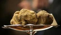 Italie: une truffe blanche de 100.000 euros à la cantine des pauvres