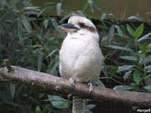 Découverte en Australie de deux spécimens rares de l'oiseau symbole du pays