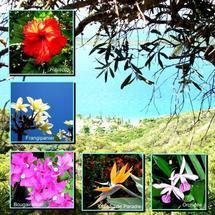 Les plantes de Nouvelle-Calédonie, émeraude planétaire