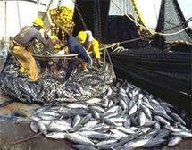 Pêche au thon dans le Pacifique : le syndrome de la Commission baleinière