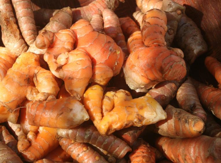 Curcuma longa. Le curcuma (re'a Tahiti, re'a ma'ohi) est une plante médicinale et tinctoriale ainsi qu'un condiment apprécié.