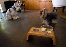 """La nouvelle sensation de Rio: un restaurant """"naturel"""" pour chiens"""
