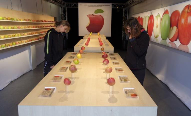 Moselle: une exposition de pommes comme dans un Apple store
