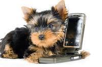 Var: le chien déclenche un appel d'urgence à la gendarmerie