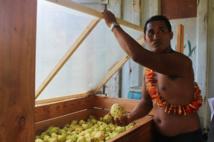 Ce jeune agriculteur de Papeari voit la vie en bio !