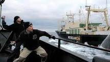 """Sauver les baleines en Antarctique, un """"job"""" à haut risque"""
