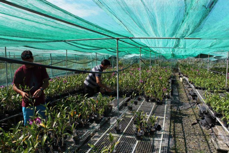 Tous les jours, il faut soigner les orchidées, réparer les serres, veiller à la coupe des fleurs, etc.