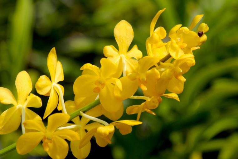 Les vandas sont des fleurs très robustes, acceptant le plein soleil.