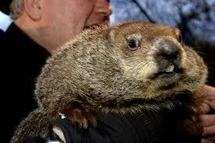 USA: en pleine tempête, la marmotte Phil prédit un printemps précoce