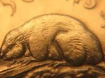 Une substance fait repousser les poils des souris: espoir pour les chauves
