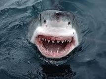 Australie: un plongeur tué par des requins