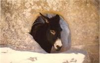 Israéliens et Palestiniens au secours des ânes battus