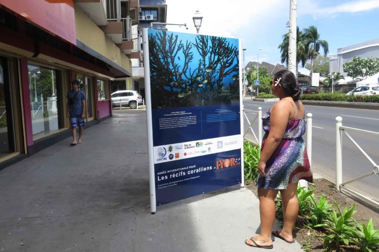 """""""Récifs coralliens, un enjeu pour l'humanité"""", la suite"""