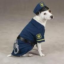 Démonstration au lycée: un chien policier tombe sur une cache de drogue