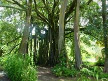Crédit photo : Tahiti Heritage