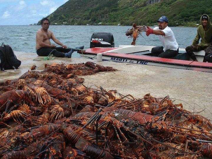 Pêche miraculeuse de langoustes à Rapa après l'ouverture du Rahui