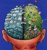 Les structures cérébrales détermineraient si on est de droite ou de gauche