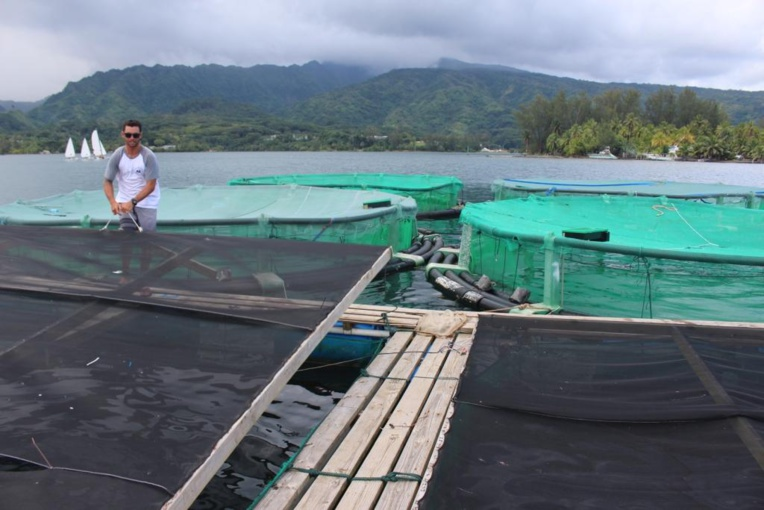 Un élevage de crevettes unique au monde