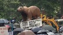Manifestation dans le Béarn contre la réintroduction de l'ours
