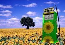 Les biocarburants pourraient représenter 27% des besoins mondiaux en 2050