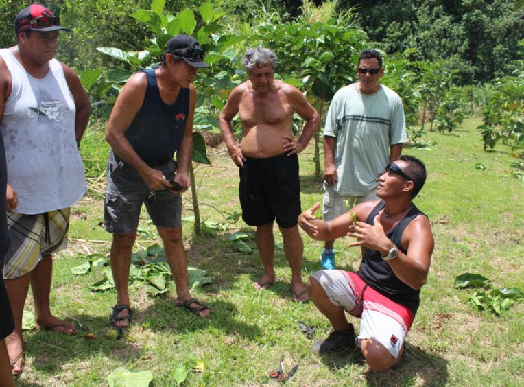 Jean-Baptiste Tavanae apprend les secrets du bio à d'autres agriculteurs.