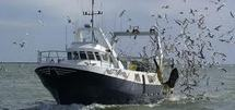 La pêche en eau profonde: peu de bateaux mais un impact écologique majeur