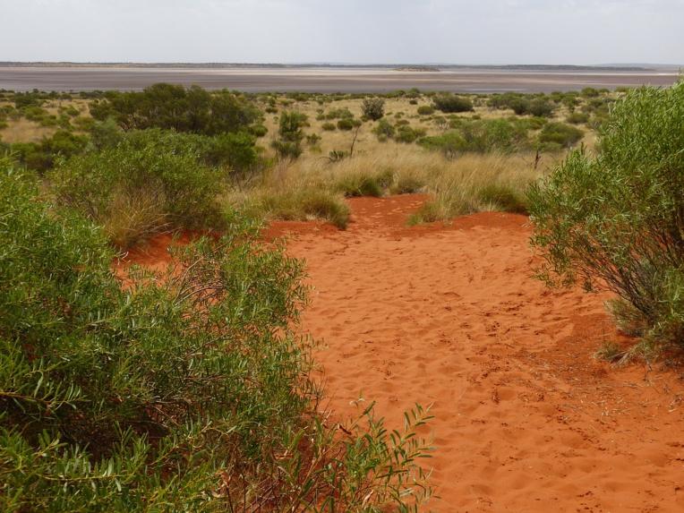 Australie: une Allemande de 62 ans perdue dans le bush, la police pessimiste