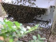 Algérie: des abeilles empêchent un affrontement pour un lopin de terre