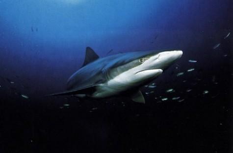 Un adolescent tué par un requin en Nouvelle-Calédonie