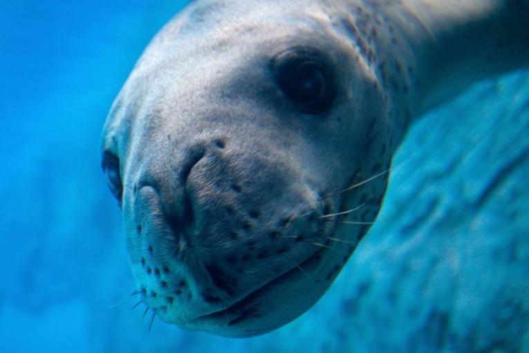 Nouvelle-Zélande: dans les déjections d'un léopard de mer, une clef USB exploitable
