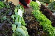 Bactérie mortelle: aucun lot de graines germées contaminées en France