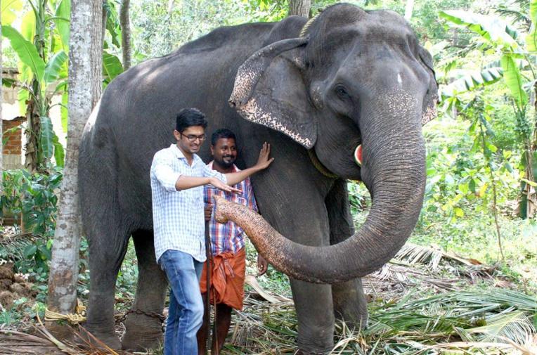 Inde: une éléphante d'Asie meurt à 88 ans, un record de longévité