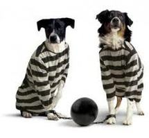 Israël: un chien errant condamné à la lapidation par un tribunal rabbinique (média)
