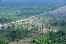Les forêts tropicales de Sumatra et du Honduras déclarées en péril (Unesco)