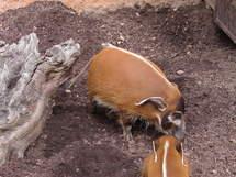 Plus de 1.000 espèces découvertes en dix ans en Nouvelle-Guinée (WWF)
