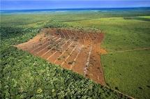 Amazonie: la forêt victime d'herbicides répandus par avion