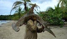 Les Bahamas interdisent la pêche au requin