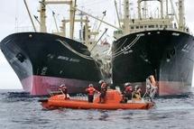 """Tsunami japonais: """"Robin des Bois"""" s'inquiète pour les baleines"""