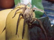 Allemagne: une araignée provoque la fermeture d'un hypermarché